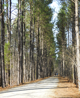 "Cary is Ranked ""Walk Friendly"" ….Time to Hit the Trails!"